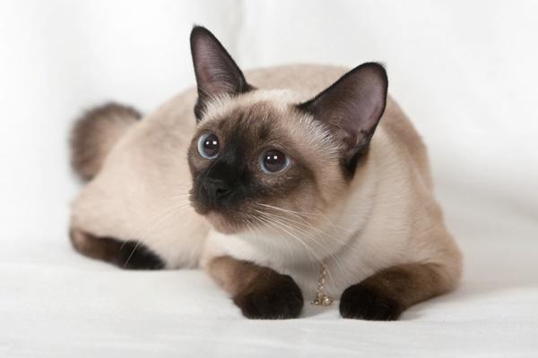 Cele mai frumoase pisici din lume